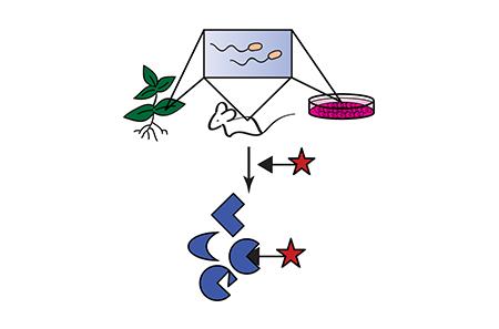 ABPP schematic